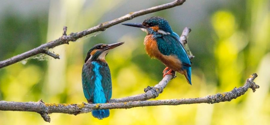 idiomi-ptice